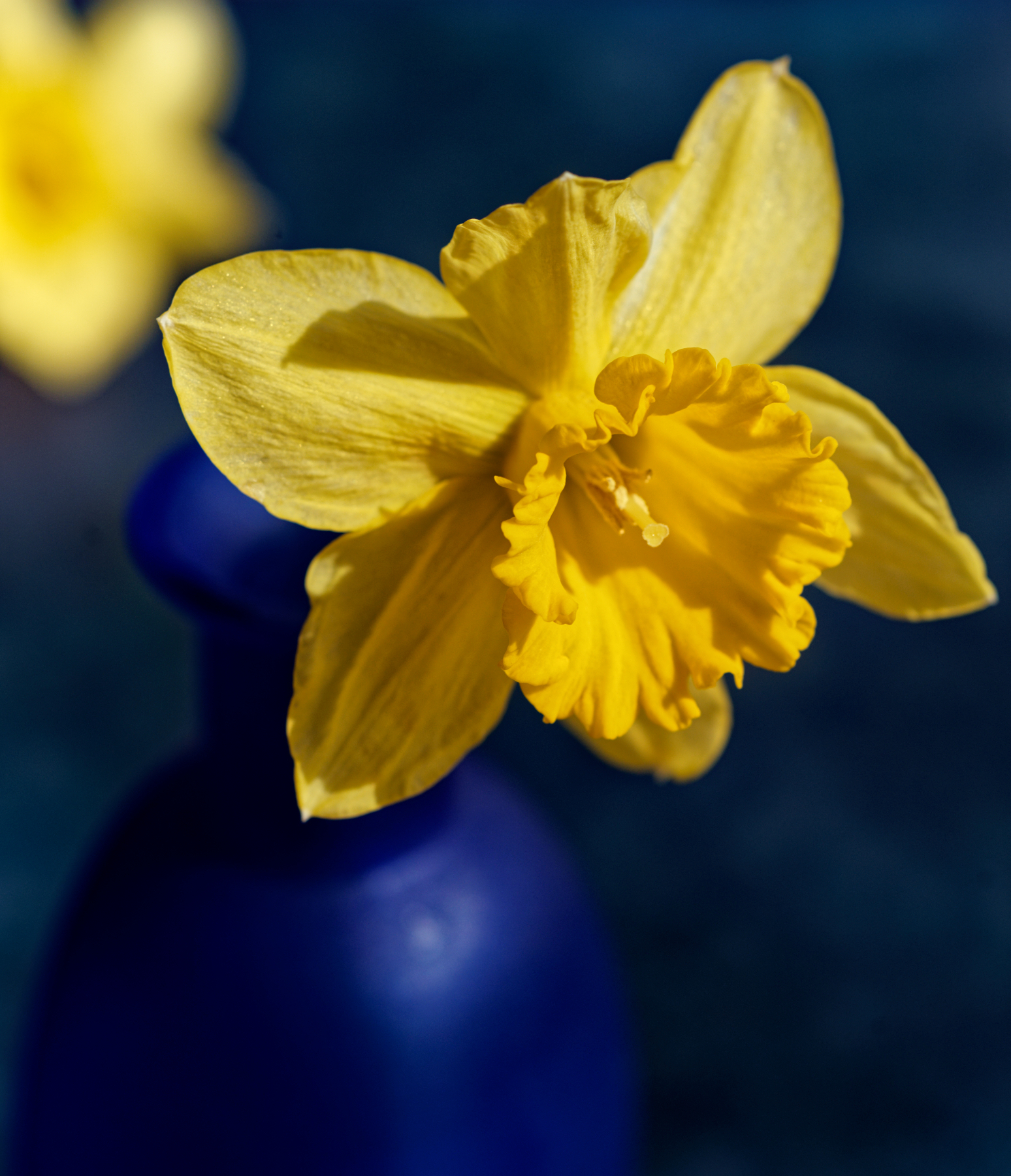 Daffodils in Blue.jpeg