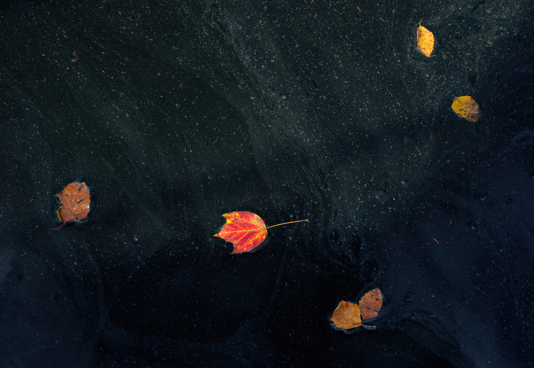 Leaves in the Water.jpeg